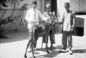 خرید و فروش گوزن در ایران قدیم!+عکس