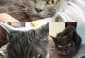 عصبی ترین گربه جهان را ببینید+عکس