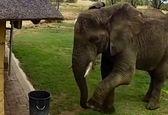 احترام حیرت آور یک فیل به محیط زیست سوژه شد! + فیلم