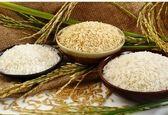 رشد بی وقفه قیمت برنج در سال ۱۴۰۰! افزایش قیمت برنج ایرانی