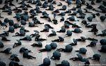 اعتراض عجیب خرده فروش ها در فرانسه! عکس