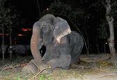 این فیل پس از آزادی از شادی اشک ریخت  +عکس