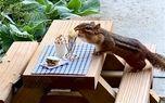 زندگی لاکچری یک سنجاب خبرساز شد! +عکس